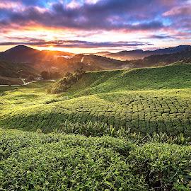 Sunrise by Ng Yannfae - Landscapes Mountains & Hills ( clouds, hills, mountain, sunrise, tea, plantation, sun,  )