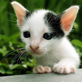Nang ndi mak ku? by Aswin Blinkerz - Animals - Cats Kittens