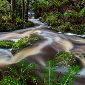 Dial Range Forest Reserve. by Robert Stanley - Landscapes Waterscapes (  )