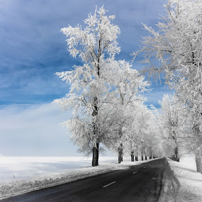 Crystal road by Lupu Radu - Landscapes Travel ( cold, ice, white, trees, crystal, road, , #8rtcoMagazine )
