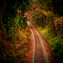 Just Up Ahead by Michael Grado - Nature Up Close Trees & Bushes ( color, railroad, trees, train, tracks )