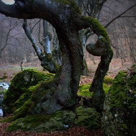 tortured tree by Cosmin Popa-Gorjanu - Nature Up Close Trees & Bushes