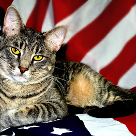 WeeG the Patriotic Cat by Jessica Price - Animals - Cats Portraits
