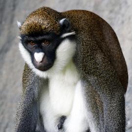 by Patrick Sherlock - Animals Other Mammals