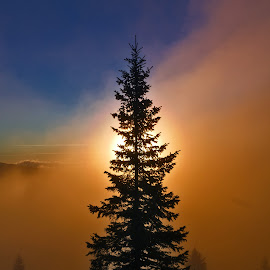 Sunrise in fog by Ioan Ciobotaru - Landscapes Forests ( mountain, tree, autumn, fog, sunrise, landscape, morning )