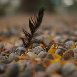 Fall Feathers by M R - Nature Up Close Leaves & Grasses ( orange, pebbles, bokeh, rocks, feather, black )