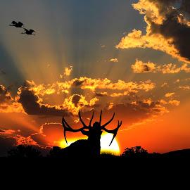Mornings First Call by James Harrison - Digital Art Animals ( yellowstone, nature, elk, wildlife, bull elk, sunrise )