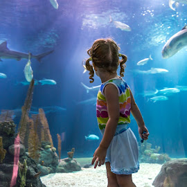 Wow...SHARKS!!! by David Slack - Babies & Children Children Candids ( omaha, zoo, fish, aquarium, sharks )