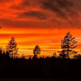 Heavens on fire by Ewa Nilsson - Landscapes Sunsets & Sunrises ( sweden, lapland, sunset, trees, forest )