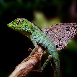 my trusted wings by Hendrata Yoga Surya - Instagram & Mobile Android ( kupu kupu, green crested lizard, londok, buterfly, bunglon surai )