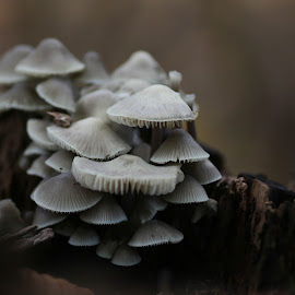 by Jacqueline Van den Berg - Nature Up Close Mushrooms & Fungi