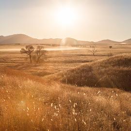 San Rafael Valley by Gannon McGhee - Landscapes Prairies, Meadows & Fields ( rafael, san, grass, arizona, valley, sun )