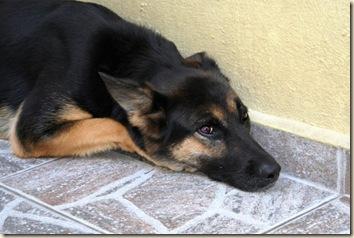 2008-05-15 - Dingo