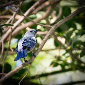 Unknown Bird by Lou Plummer - Animals Birds ( zoo,  )