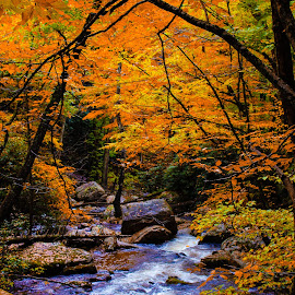 fall at its greatest by Bridgette Dorsett - Landscapes Mountains & Hills ( fall colors, fall, river, color, colorful, nature )