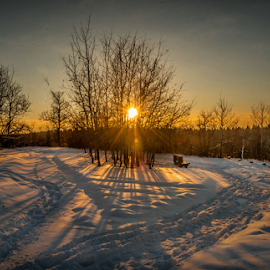 Evening Walk In City Park by Joseph Law - City,  Street & Park  City Parks ( -26 c, bench, viewing deck, edmonton, city park, shadows, footprints, winter, cold, bushes, snow, trees, sunshine, glenview )