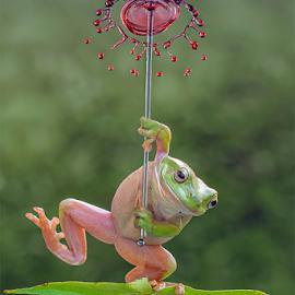 Play With Water by Ganjar Rahayu - Animals Amphibians ( reflection, waterdrop, frog, digital manipulation, animal )