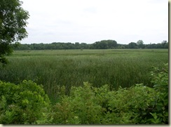 French Lake Wetlands