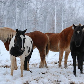 by Brandy Baker - Animals Horses (  )