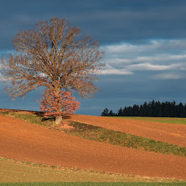 Lonely tree - Natural cycles - winter by David Hajes - Landscapes Prairies, Meadows & Fields ( clouds, grass, art of light, fine art, plants, beauty, forrest, winter, leafs, nature, hajek, sunny, hajes.org, grasslands, cloudy, trees, david, sunrise, landscapes, hajes, fields )