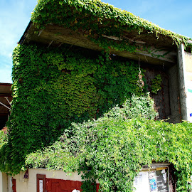 Nature gets it back by Zsigmond Bujtor - Buildings & Architecture Other Exteriors ( nature art, building, nature, spreading, green, Urban, City, Lifestyle )