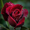 20140624-Nikon_14_038.jpg