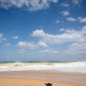ODEL by Gregor Znidarsic - Landscapes Beaches ( love, sand, blue, waves, sea, sri lanka, sun, dog beach, lie,  )