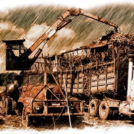 Transloader loading Sugarcane by Ron Olivier - Transportation Other ( transloader loading sugarcane )