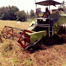 Mechanical Rice Harvest  at Upper Kuttanad  by Surej S - News & Events Technology ( technology, agriculture, culture )