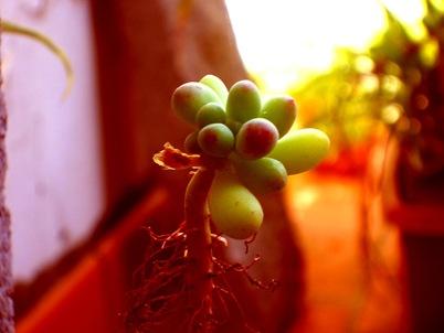 plant_04