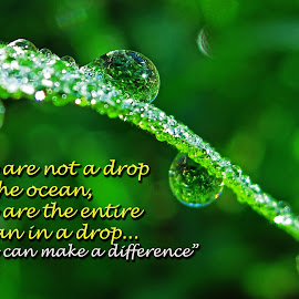 You are the entire ocean in a drop.. by Asif Bora - Typography Quotes & Sentences