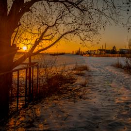 Twin Brooks City Park by Joseph Law - City,  Street & Park  City Parks ( footprints, houses, city parks, winter, twin brooks, snow, neighborhood, trees, sunshine, walkway, edmonton )
