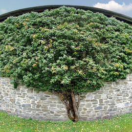 tree by Dan Dumitrescu - Landscapes Travel ( tree, grass, brick, landscape, wall )