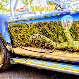Cobra Sports by Carol Fraser - Transportation Automobiles ( automobiles, sports cars, hrd, cars, cobra )