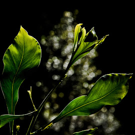 bright green by Magdalena Wysoczanska - Abstract Macro