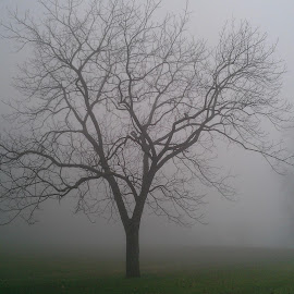 The Lone Soldier by Alvin Simpson - Nature Up Close Trees & Bushes ( solitary, soldier, winter, nature, tree, fog, green, trees )