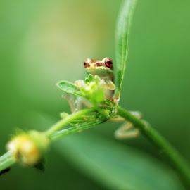 Amongst the Stems by Daisy Delgado - Animals Amphibians ( nature, frog, tree frog, amphibian, cute, animal )
