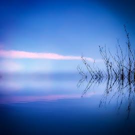 Blue dawn by Tony Swinton - Landscapes Waterscapes ( dawn, blue, sunrise )