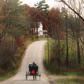 Amish Buggy by Jane Spencer - Landscapes Prairies, Meadows & Fields ( amish, buggy, autumn, trees, road )