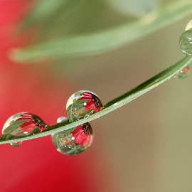 I'm coming out by Lala Fuad - Nature Up Close Natural Waterdrops
