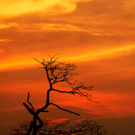I am Not Alone by KIN WAH WONG - Landscapes Sunsets & Sunrises ( old tree, sunsets, scenery, landscape, evening, sun, dead tree )