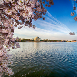 Jefferson Memorial by Donna Neal - City,  Street & Park  Historic Districts