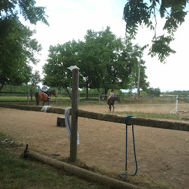 Horses by Selwyn Roberts - Sports & Fitness Fitness ( horses, family, canter, trainers )