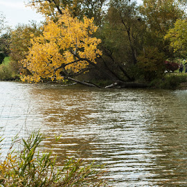 Swere Park by Howard Mattix - City,  Street & Park  City Parks ( water, city parks, autumn, weather, rereaction )