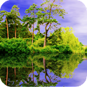 Forest Pond Live Wallpaper