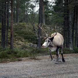 by Kristinn Gudlaugsson - Animals Other