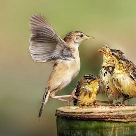 Comeback when you hear your child's by MazLoy Husada - Animals Birds