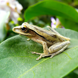 frogie frogie by Hendrata Yoga Surya - Instagram & Mobile Android