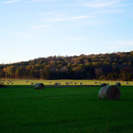 by Stacy Tuck - Landscapes Prairies, Meadows & Fields ( fall, color, colorful, nature )