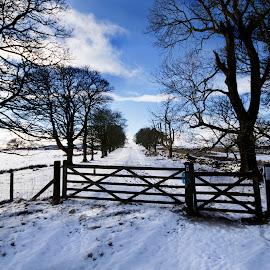 Mugdock Park Glasgow by Wendy Milne - City,  Street & Park  City Parks ( winter, snow, mugdock park, frosty, gate )